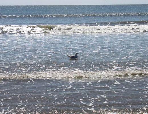 Pelican Watch 1324 - 1 Bdrm - Seabrook Island (N)