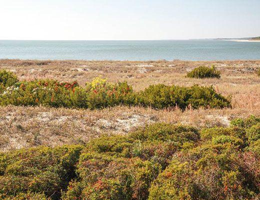 Pelican Watch 1380 - 1 Bdrm - Seabrook Island (N)