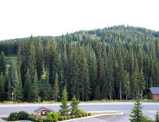 Fireside Lodge #301 - 1 Bdrm - Sun Peaks (TM)